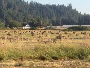 free range bales